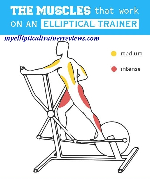 Muscles Worked In Elliptical Training