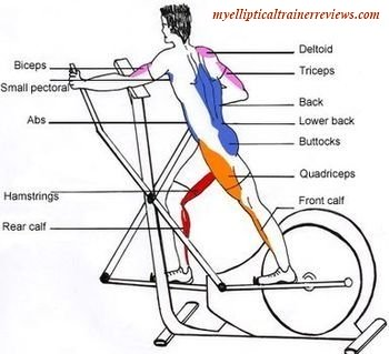 elliptical trainer workout muscles